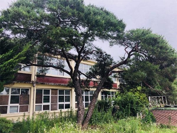 2009년 폐교된 지수초등학교와 `재벌 소나무`.  [사진 = 매경DB]