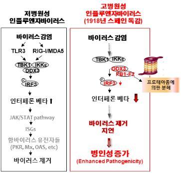 [한국연구재단 제공]