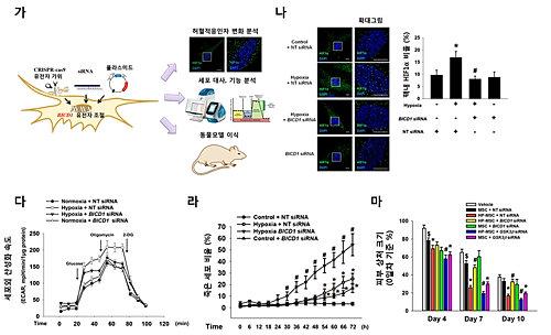 줄기세포 생명력 높여주는 '지원군 단백질' 규명