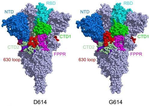 돌연변이가 생긴 스파이크 단백질